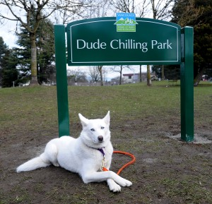 'Alka' chilling out at Dude Chilling Park renamed from Guelph Park on Feb. 27, 2014. (Nick Procaylo/PNG)